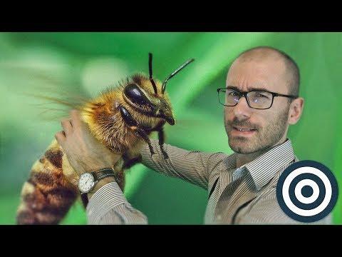 Пчёлы — это нечто
