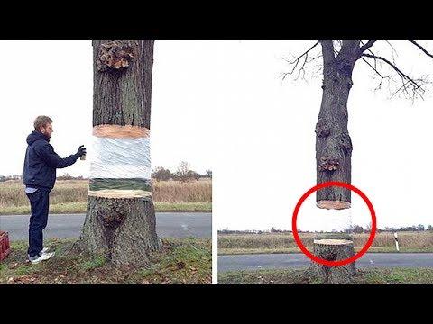 Прозрачное дерево и другие н…