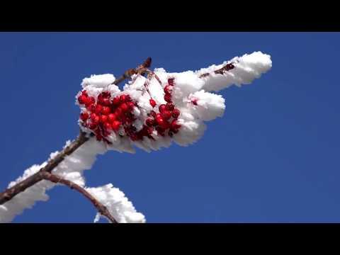 Снежный ноктюрн от Михалыча.…