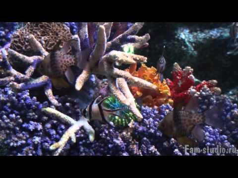 Океанариум Бангкока (клип)