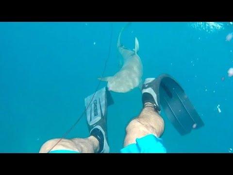 Подводный охотник сам чуть н…
