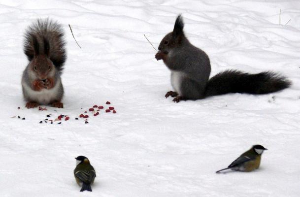 И орешки все грызут