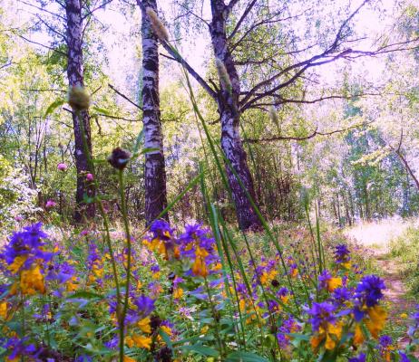 Цветы Иван да Марья