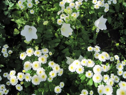 Белый садик
