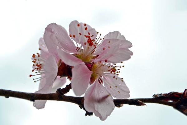 Облако вишневого цвета