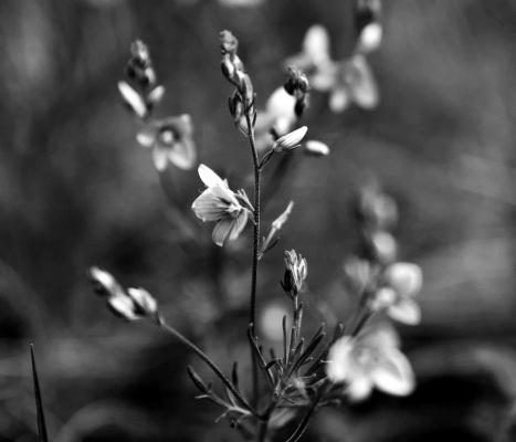 Травинки-былинки