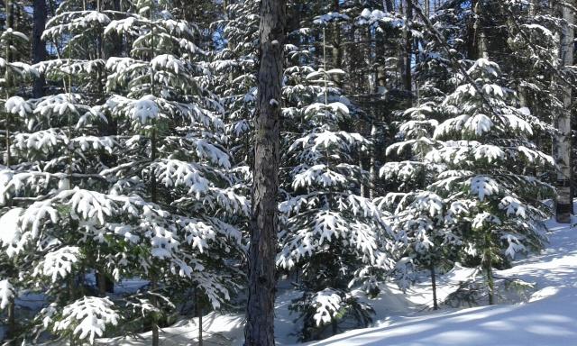 В мартовском лесу весной не пахнет