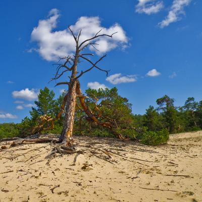 Аномальные деревья Ольхона