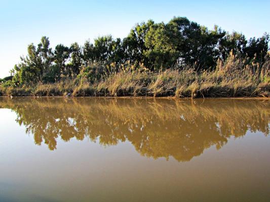 Сухие былинки над водой (+ 4 снимка)