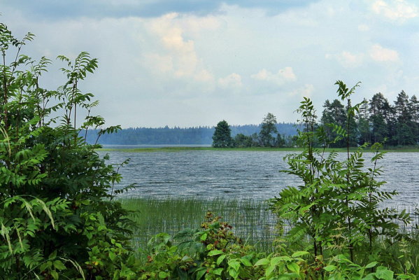 Озеро Валдай.Июль