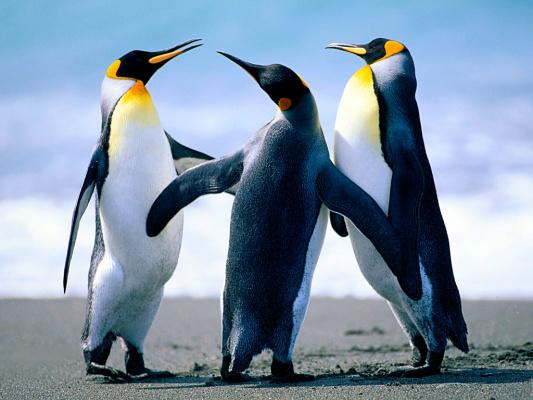 Почему хищники белые медведи не едят пингвинов?