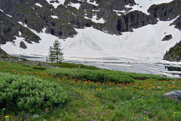 Зона альпийских лугов. Катунский хребет