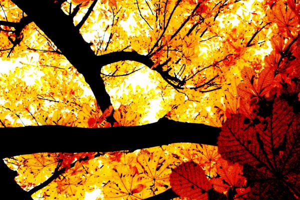 Осенние кружево