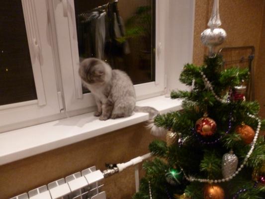 Кошка и елка