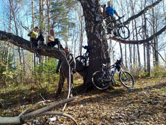 Полезли на елку за укропом, а нас арбузами придавило...