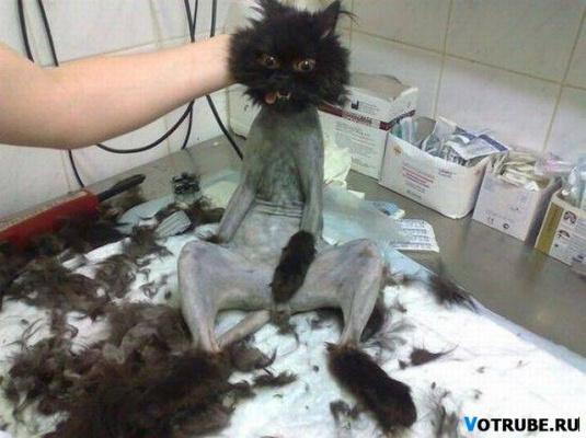 ты где шлялась всю ночь кошка ободраная!!!
