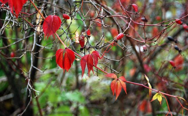 Осенние раскраски