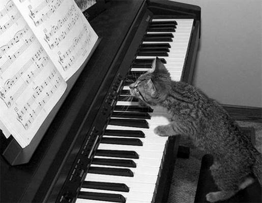 Муз.Кот
