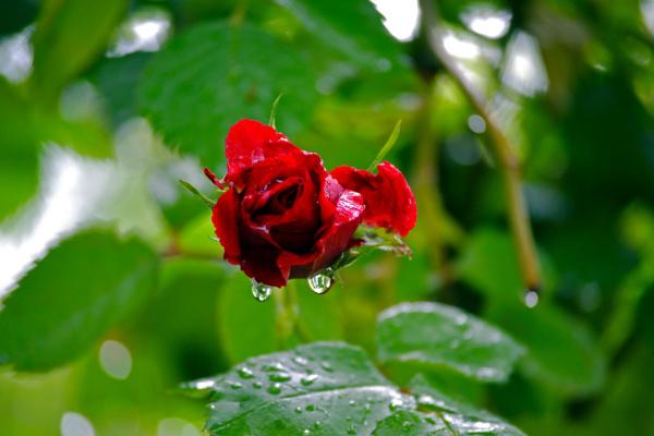 После дождя...