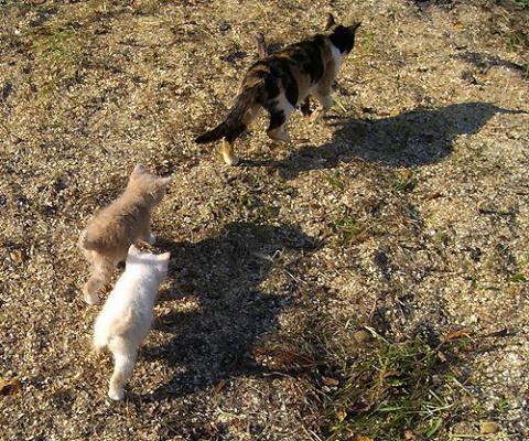 Трехцветная кошка ведет своих котят к рыбакам лакомиться рыбкой.