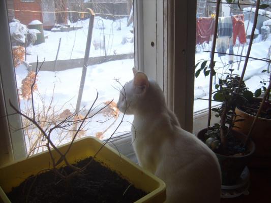 и холодно,а птичку хоца))))