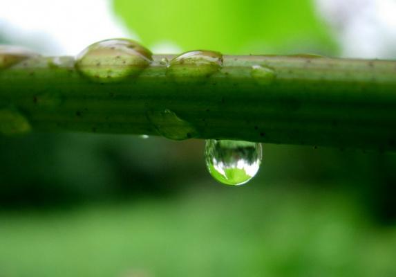 Весь мир в дождевой капле...