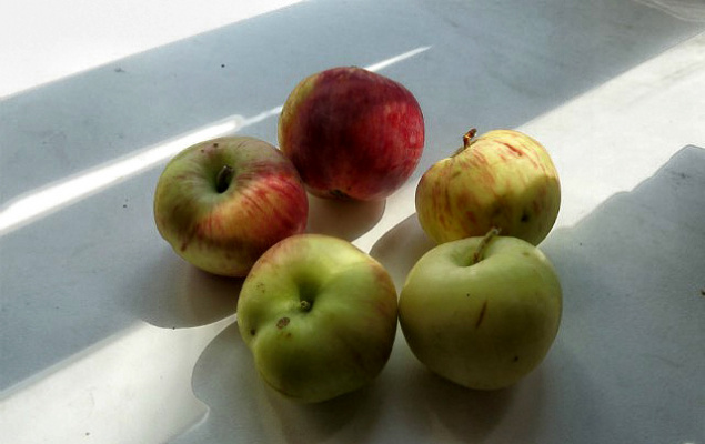 Вот такие яблочки вызревают во дворе моего дома.