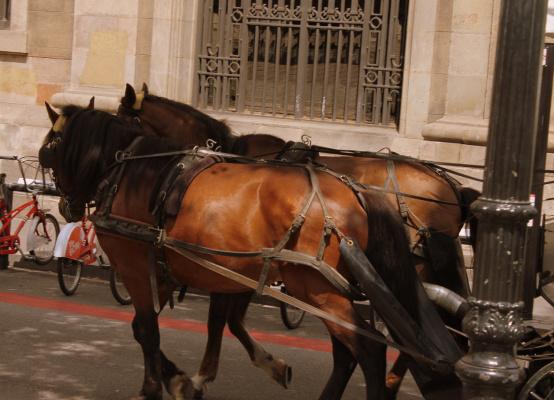 Бульвар Рамбла де Каталуния (Rambla)