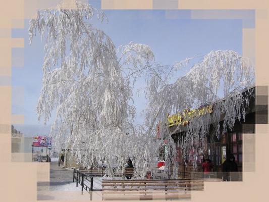 Красавица-зима в Саратове