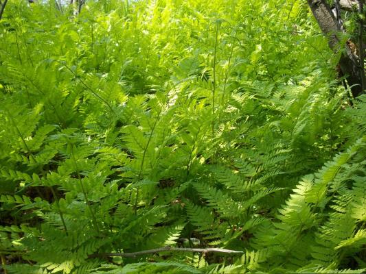 Июньская зелень