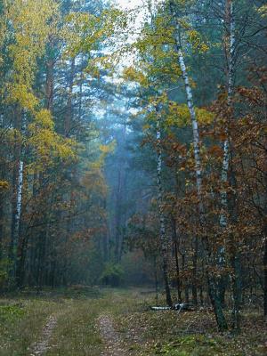 """""""В негромком голосе красавца октября Есть лета эхо и зимы предвестье ..."""""""