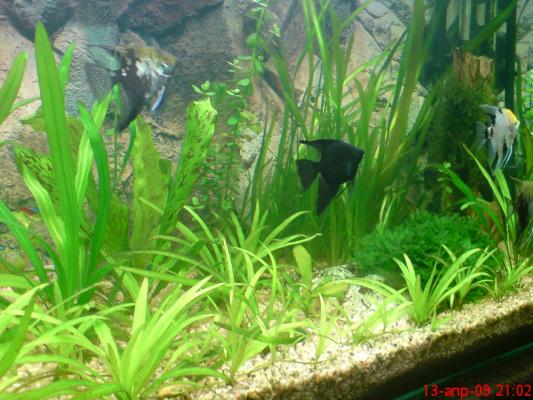 44 дня с запуска аквариума