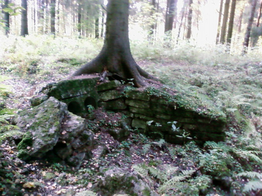 И на комнях растут деревья.Павловский парк.
