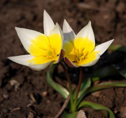 Весна будет...