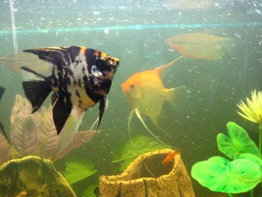мои рыбы