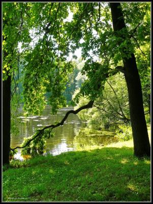 Красота пруда...