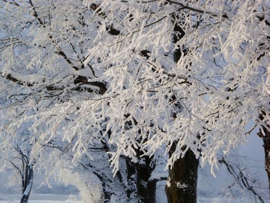 Зима....