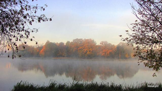 Туман на прудах.