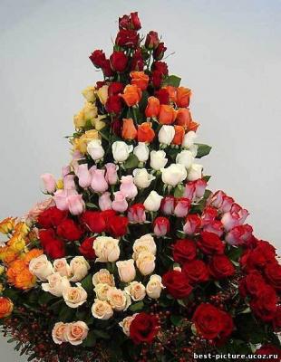 Пирамида роз