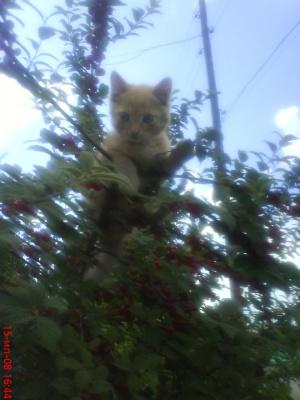 котик Лева на вишни
