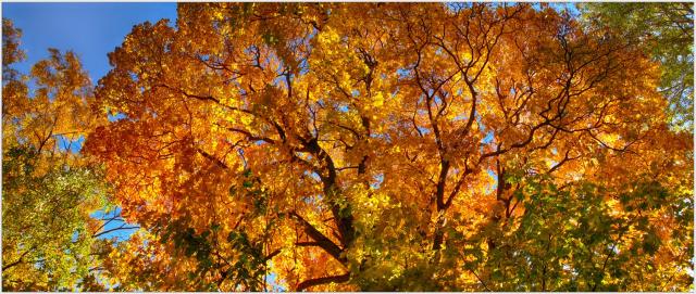 Осенний фейерверк.))