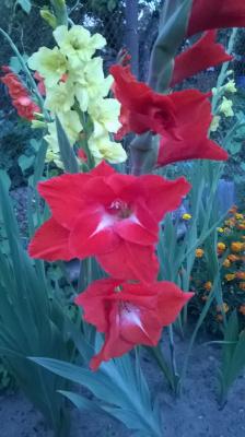гордые цветы