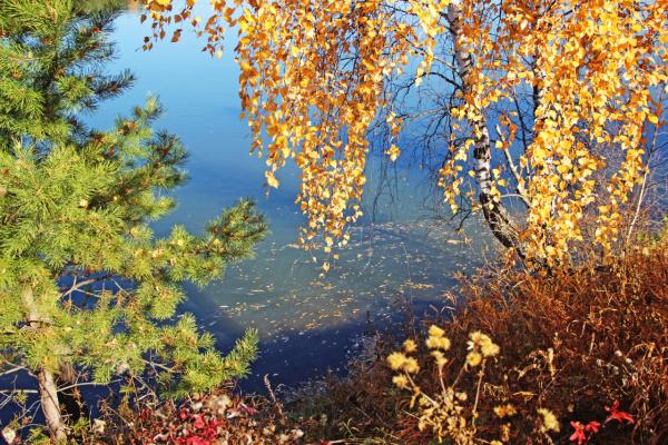 Осенние занавески