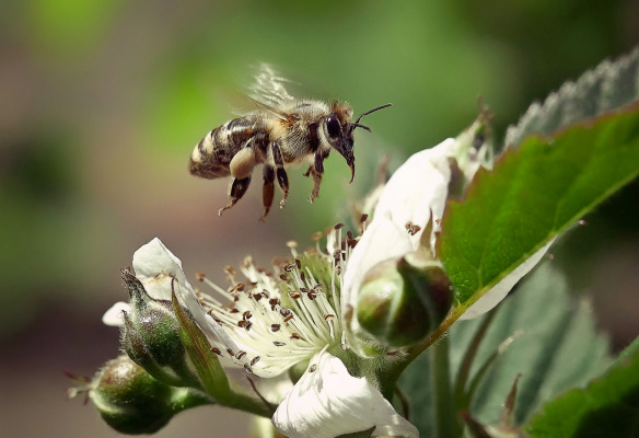Пчелка на работе .