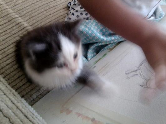 Я тоже могу рисовать.........