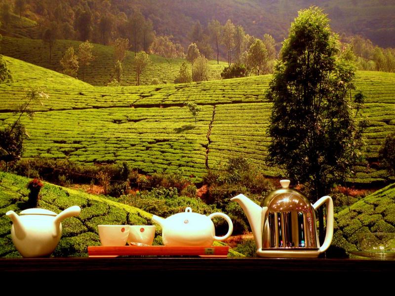 Чаепитие на фоне прелестного пейзажа