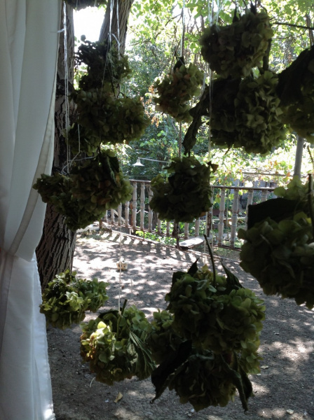Отцвели уж давно гортензии в саду, висят теперь сушатся