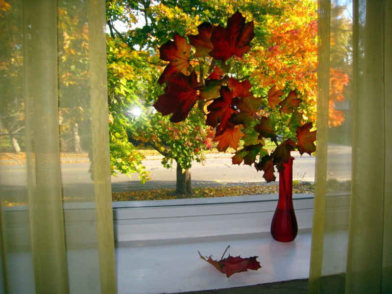 За моим окном осень