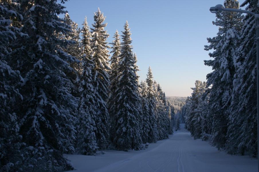 Картинки тайга зимой, картинки