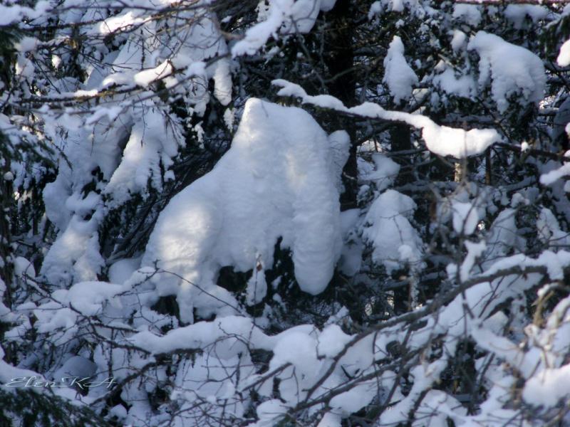Снежный ящер